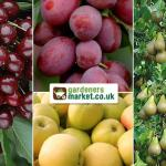 Ultimate Fruit Tree Collection £34.99