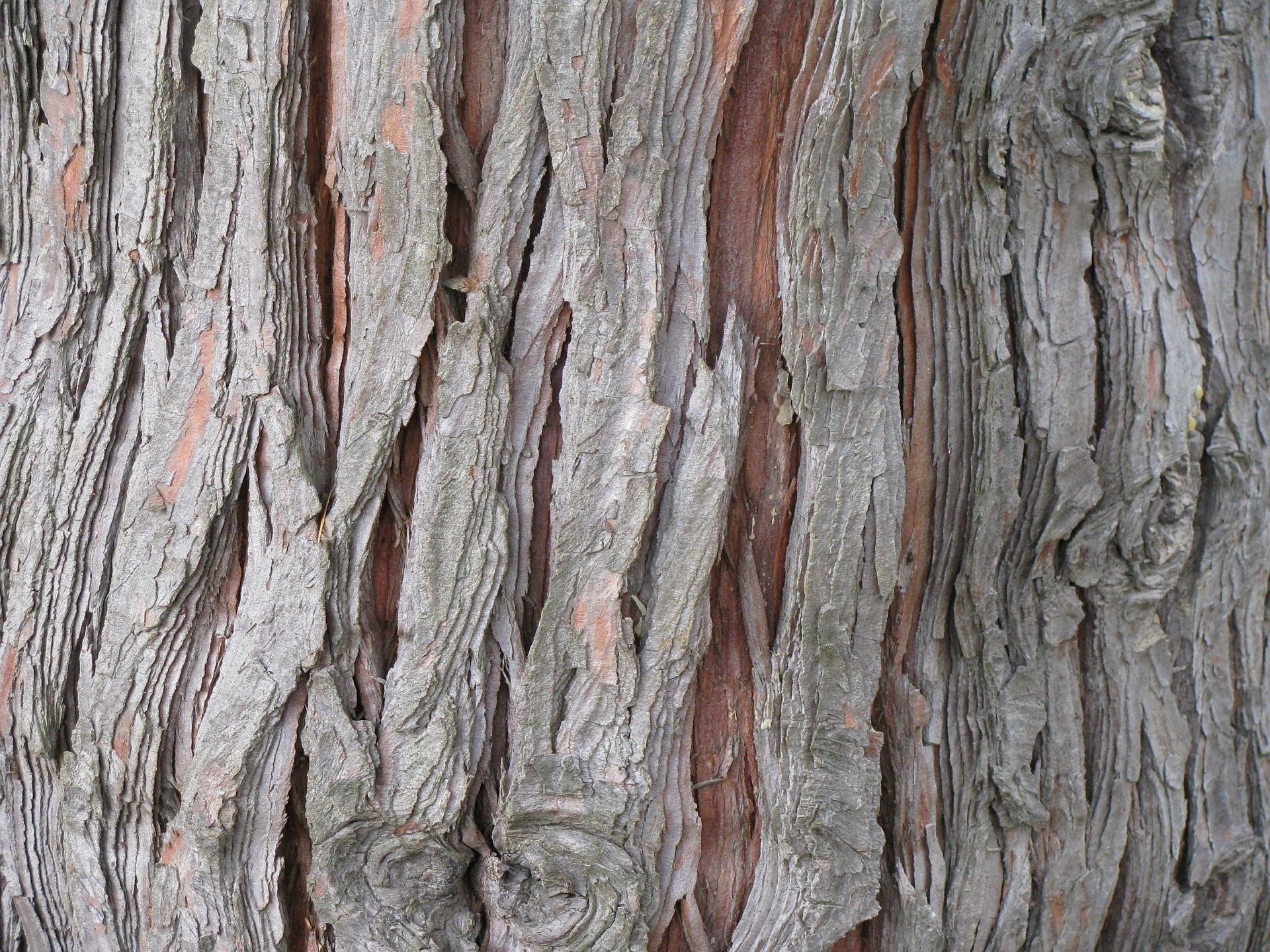 aceite esencial de cedro para la psoriasis