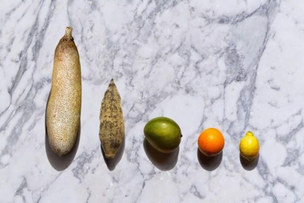 fruitfinal