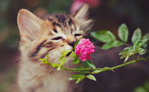 animals-smelling-flowers-latest