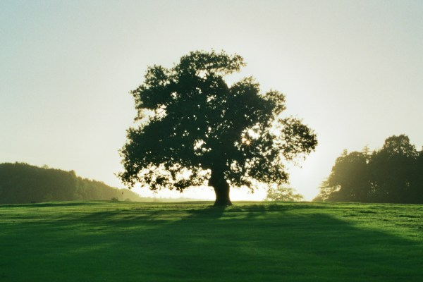 quercia-beauty-skincare-La Chênaie