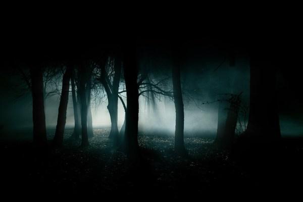 dark-woods-forest-image-31000