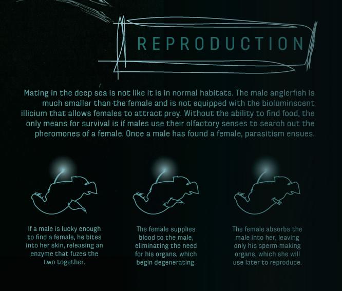 angler-reproduction