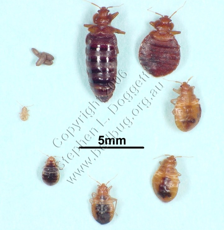Bed Bugs Queen Size Adult Loft Beds View Original Updated On