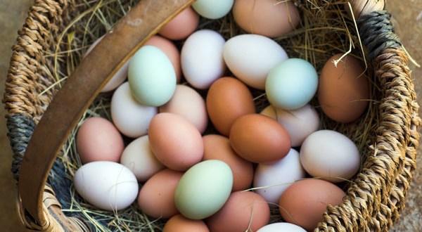eggs_16x9