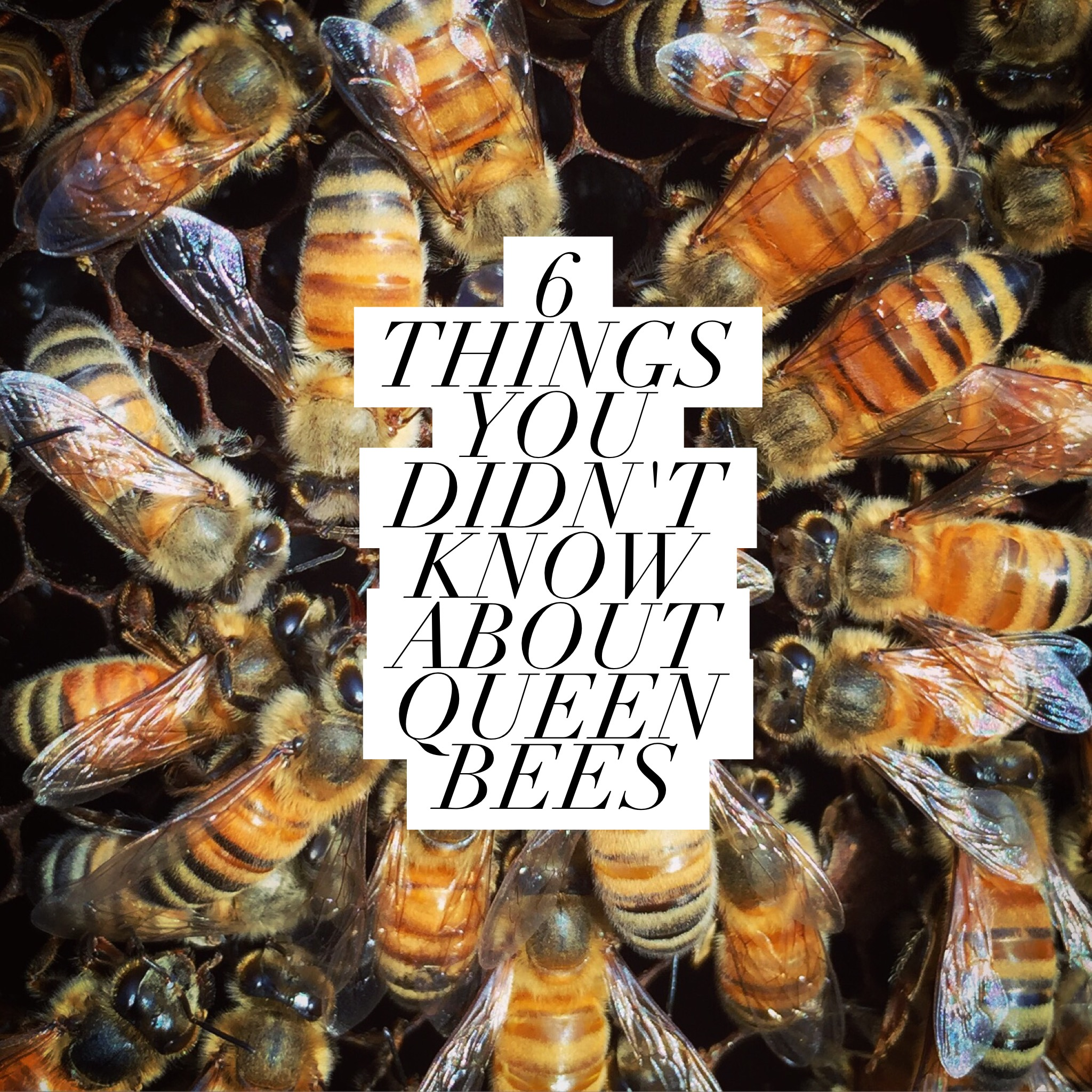 Fanciful Beekeeping Like A Girl Things You Know About Queen Bees Do Bees Sleep On Plants Do Bees Sleep At Night Time houzz-02 Do Bees Sleep