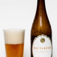 Four Winds Brewing Co. - Nectarous Dry Hopped Sour Ale