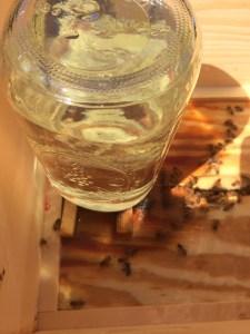Glass Feeder Up on Wooden Sticks
