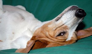 Treating canine constipation