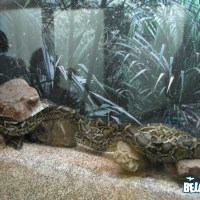 Huge snake at Belgrade zoo