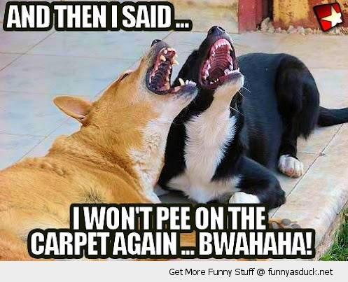 funny-laughing-dogs-pee-carpet-pics