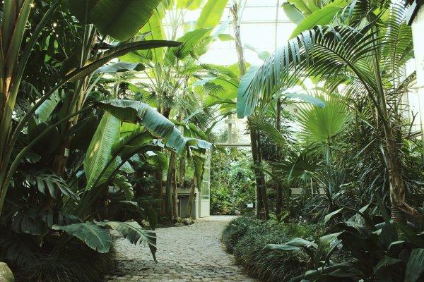 credits: Botanical Garden
