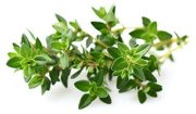thyme weight loss hack