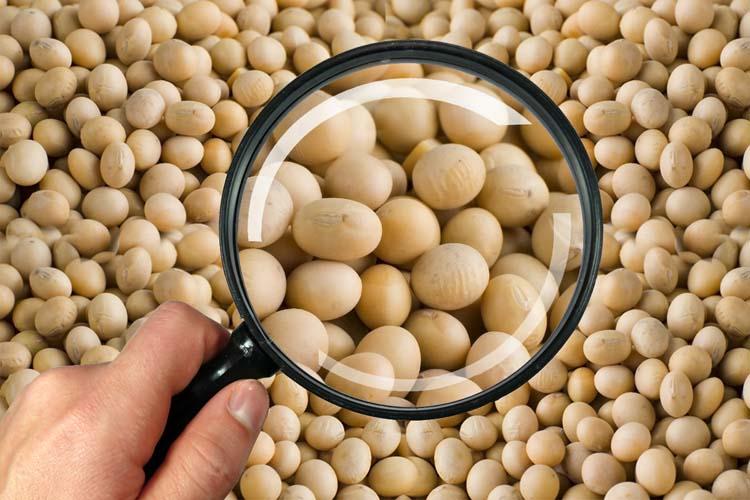 7 de novembro – Você recebe sementes