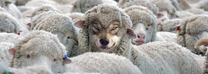 16 de novembro – Natureza de ovelha ou de lobo