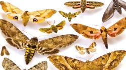 Moving natural history collections online