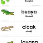 Flashcard Gratis: Reptil dan Amfibi