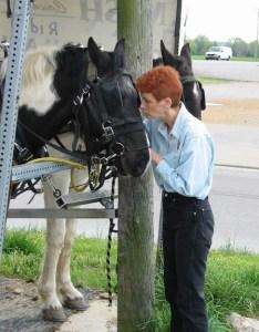 Amish Horse