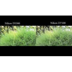 Small Crop Of Nikon D5300 Vs D3300