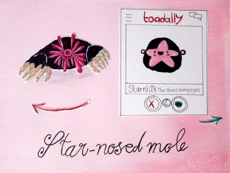 Die hässlichsten Tiere - Platz 6 star-nosed mole