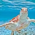 island-tour-and-turtle-farm-cayman