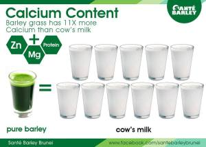 Barley has more Calcium than Milk