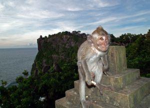 Monkey_at_Ulu_Watu_Temple