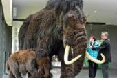 Scientists closer to recreating downy mammoth