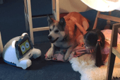 Peddy, a World's First Multi-Functional Robot for Pets, Launches…