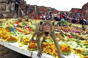 The monkey buffet festival – Thailand