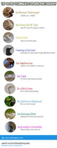bird-photography-infographic