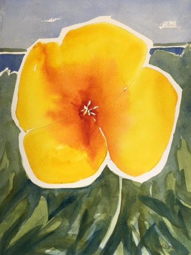 A watercolor by Bill Paarlberg of a flower in Celia Thaxter's Garden on Appledore Island.