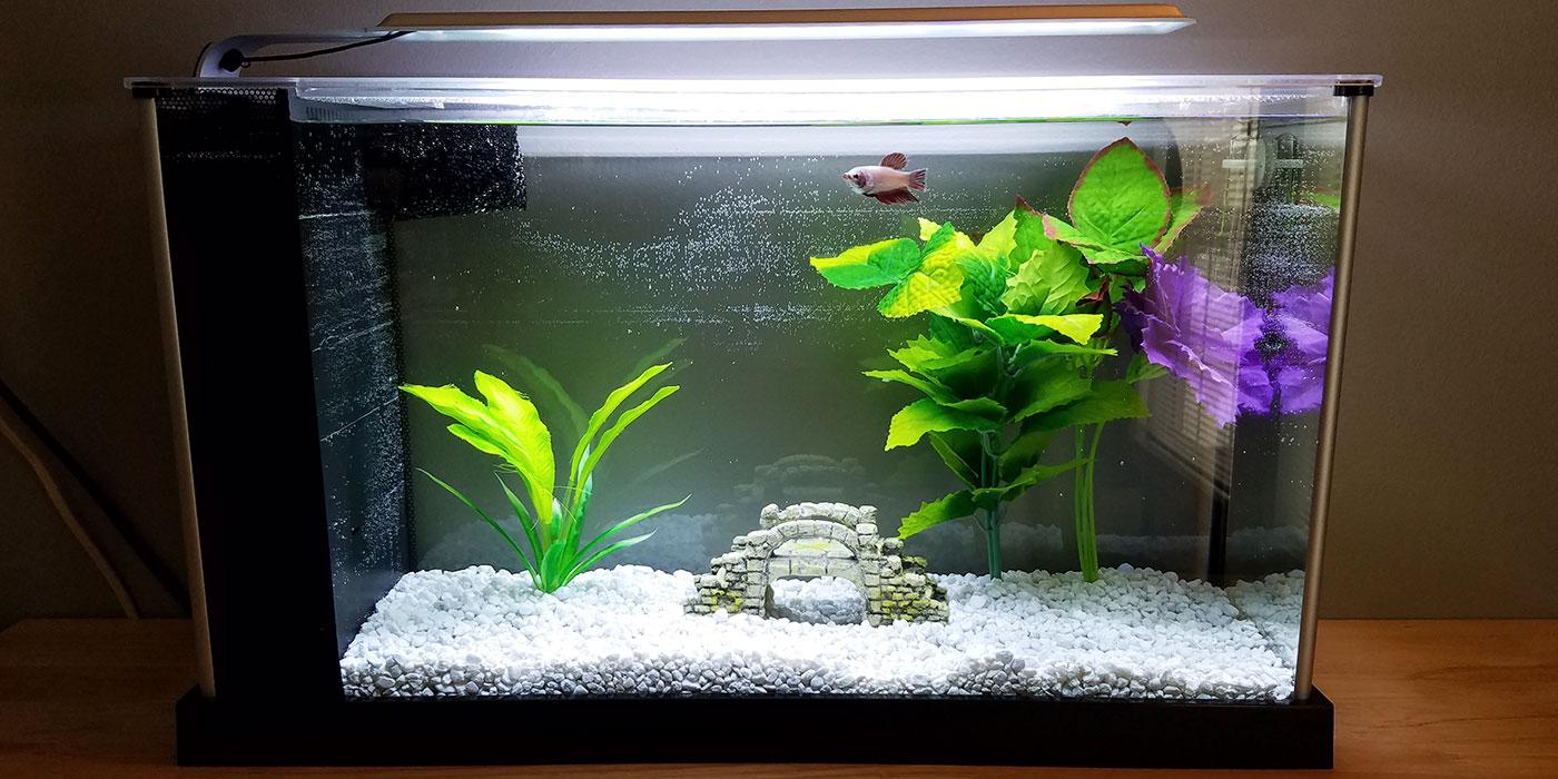Swish Filtered Tank Do Betta Fish Need A Betta Fish Bowl Size Betta Fish Bowl Live Plant Betta Fish houzz-02 Betta Fish Bowl