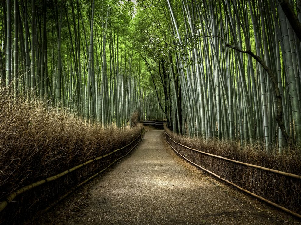 bamboo-forest-japan_25291_990x742