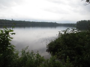 Brown Tract Pond