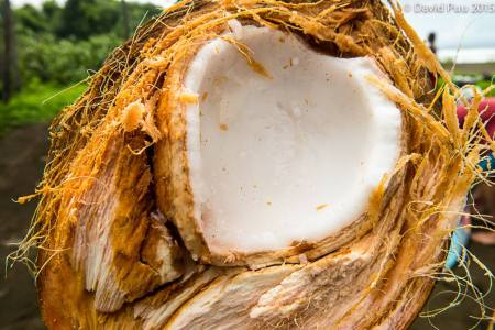 Love is all around us. You just need to see it. A coconut heart.