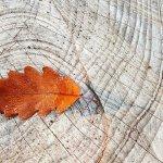 autumn-2815427_1280