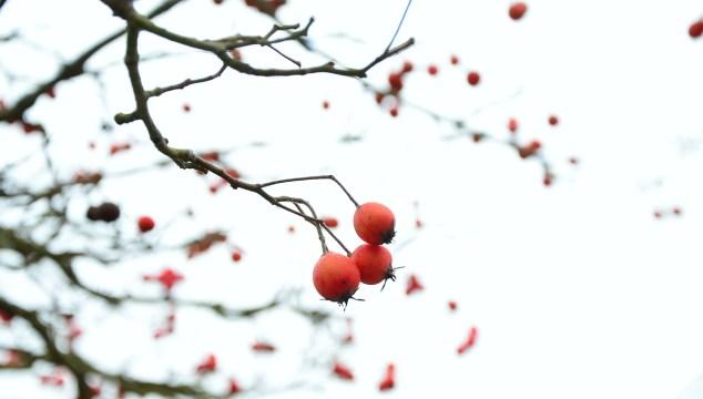 winter-608149_1280