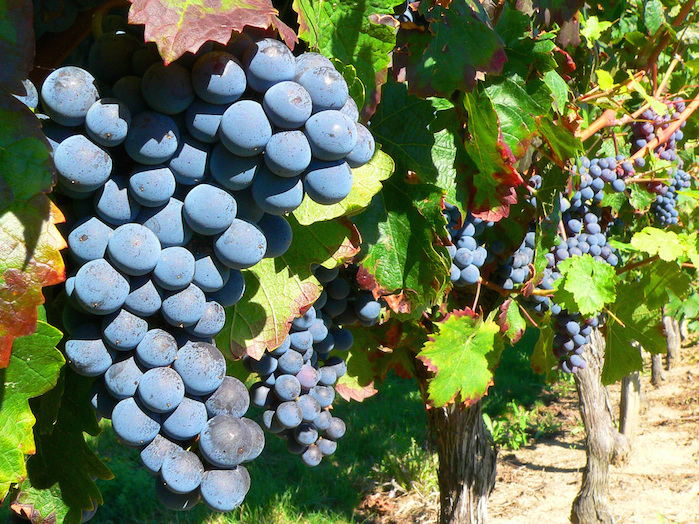 grape-on-the-vine-1326015-1280x960