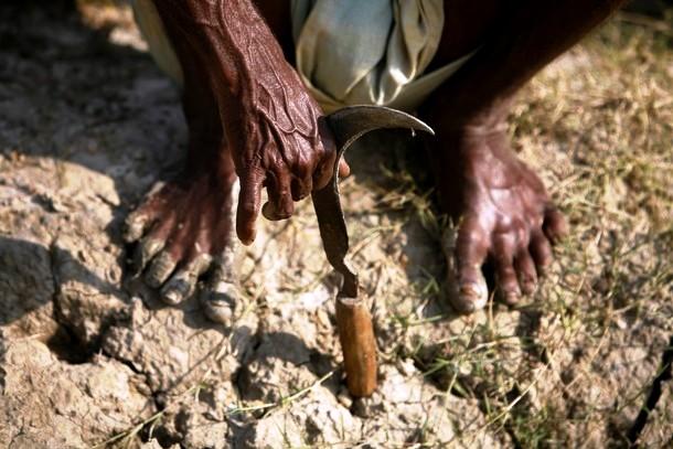 भारतीय किसान