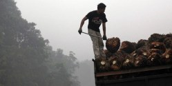 Palm Oil Giant Wilmar Caught in Forest Scandal