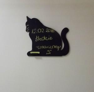 Kotek z WTZ-u