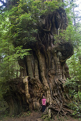 big-cedar-tree-tiny-girl-by-woodleywonderworks