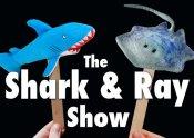 shark-and-ray-still