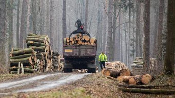 Szewnia Dolna . Lasy Adamowskie , ktore sa czescia otuliny Narodowego Parku Roztoczanskiego i stanowia czesc Obszaru Natura 2000 oid kilku lat sa bezlitosnie wycinane