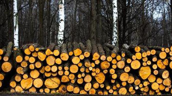 Lasy Państwowe wydają miliony na swoich rzeczników i promocję. Ile tam się zarabia?