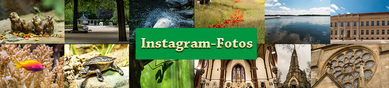 logo_f_instagram-fotos_09-2016