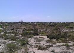 Malindi-Beach-plots-for-Sale-in-Mambrui1-300x180