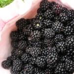 Blackberries for babies