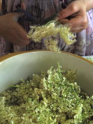 Bibliocook.com - making elderflower cordial